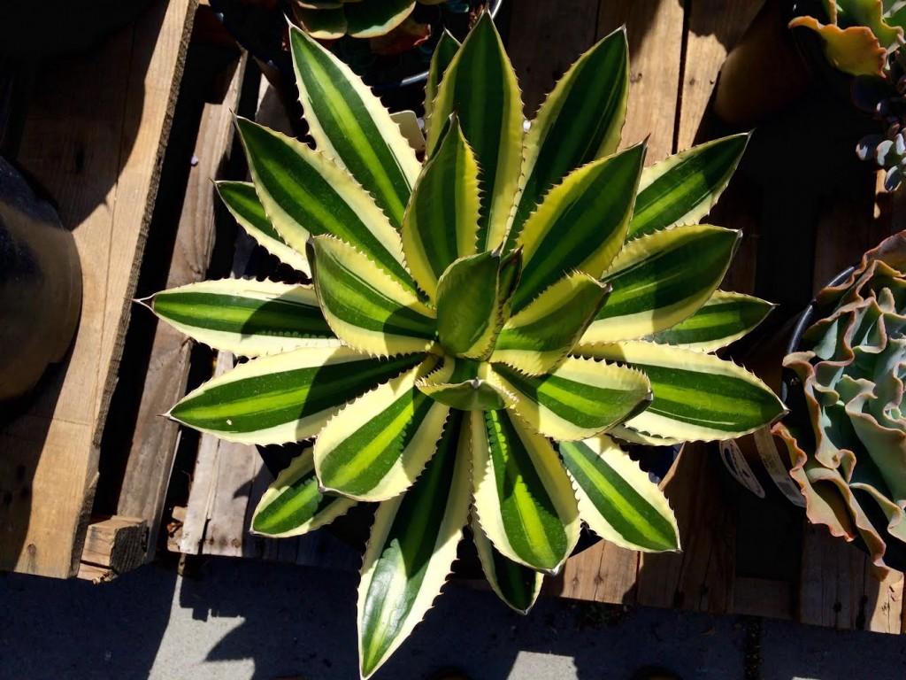 Drought Tolerant Plants | #EveryDrop