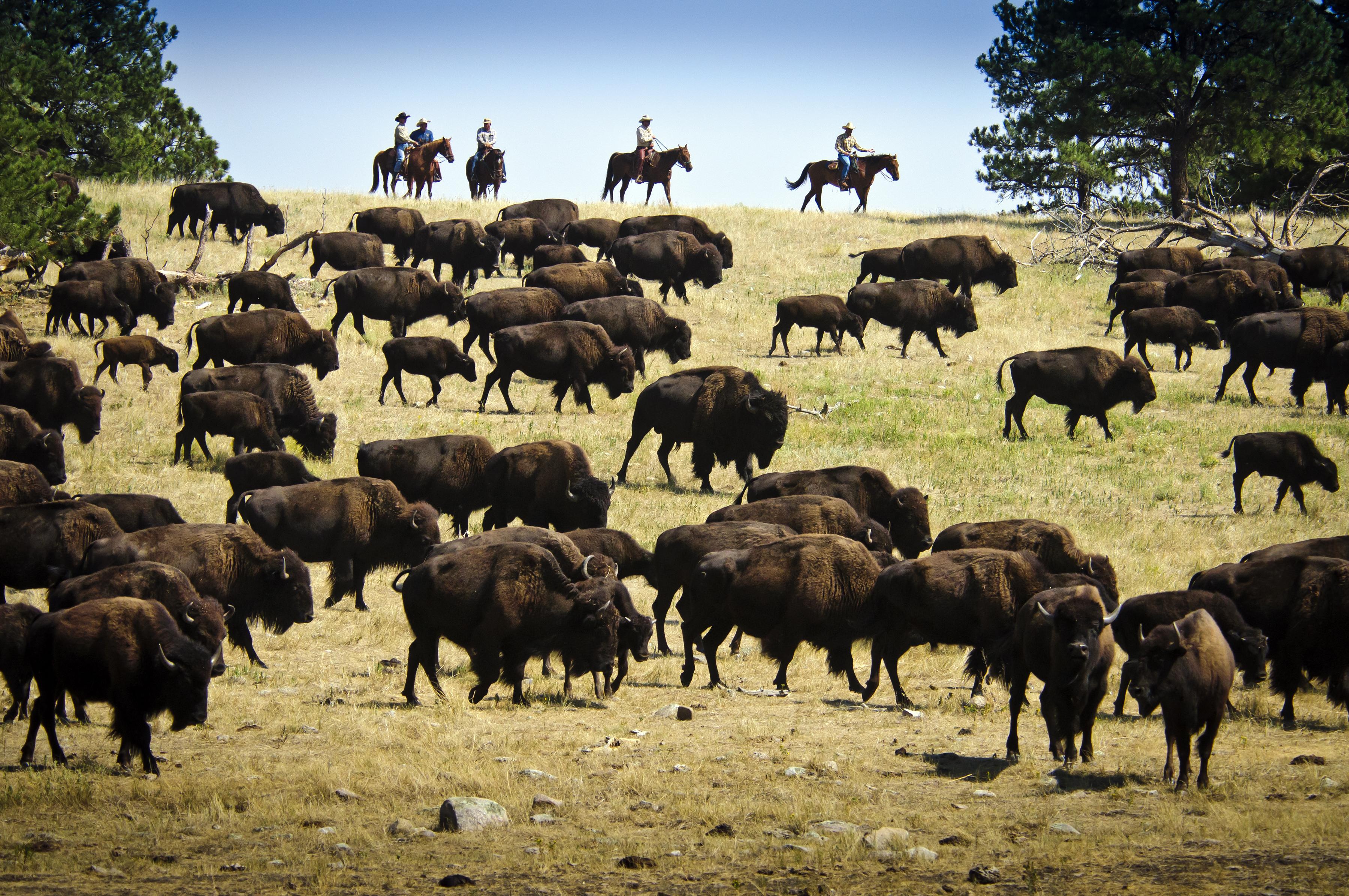 South Dakota Instagram Scavenger Hunt